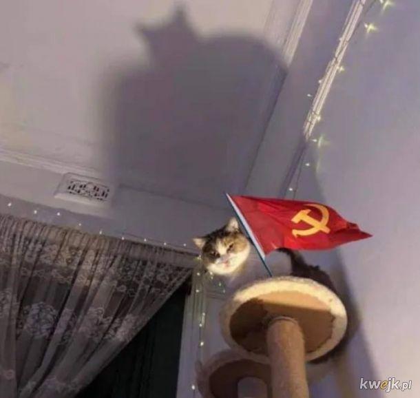 Widmo kotmunizmu