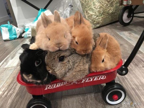 Urocze króliczki... bo zasługujesz na galerię z uroczymi króliczkami, obrazek 5