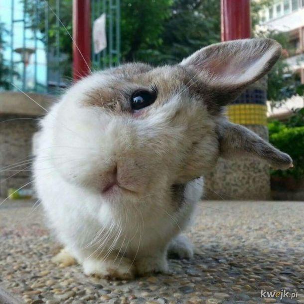 Urocze króliczki... bo zasługujesz na galerię z uroczymi króliczkami, obrazek 18