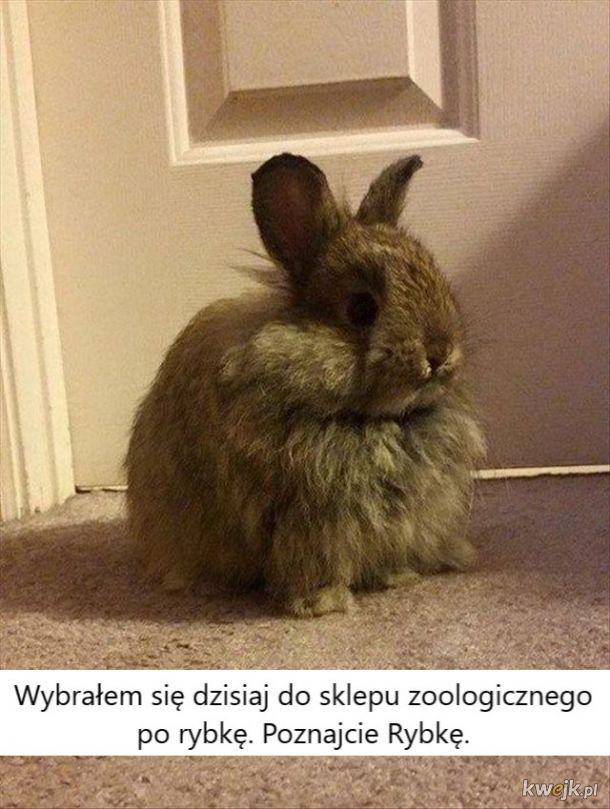 Urocze króliczki... bo zasługujesz na galerię z uroczymi króliczkami, obrazek 3