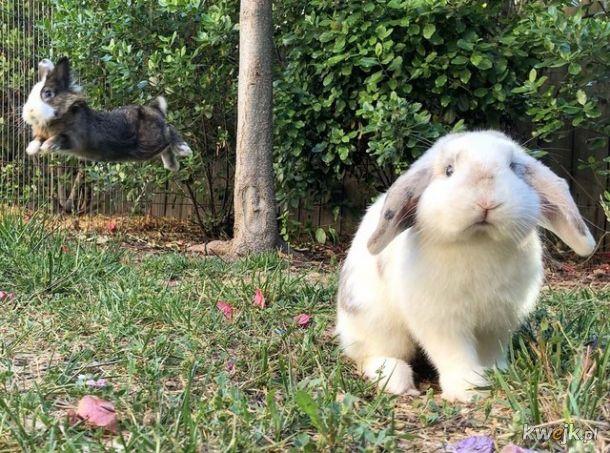 Urocze króliczki... bo zasługujesz na galerię z uroczymi króliczkami, obrazek 6
