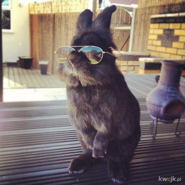 Urocze króliczki... bo zasługujesz na galerię z uroczymi króliczkami, obrazek 8
