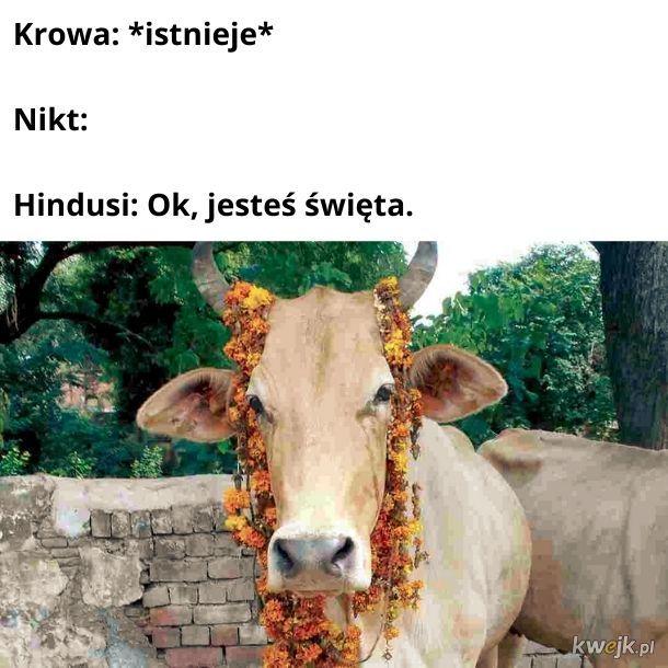 Krowy są zadowolone