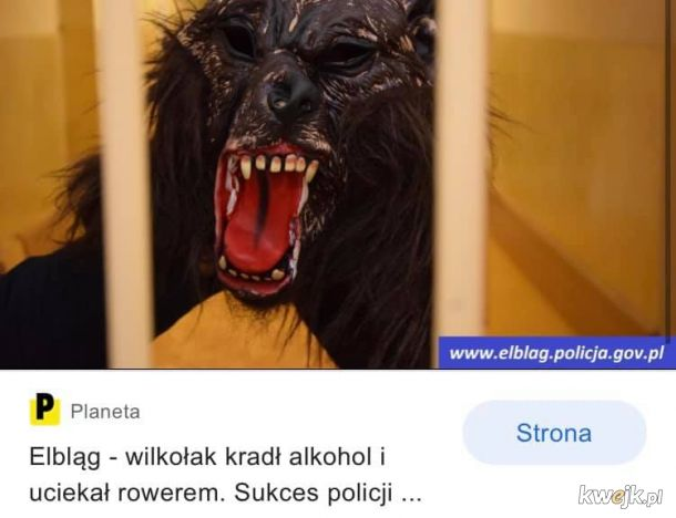 Pato wilkołak