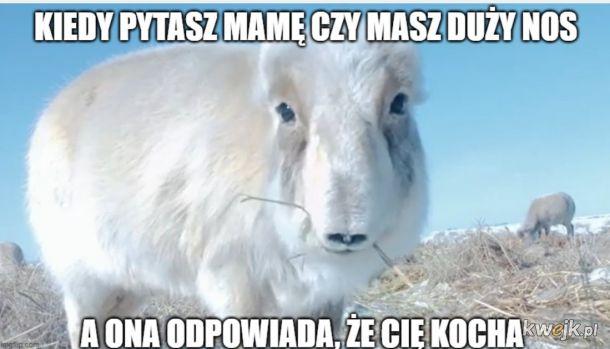 Mamooooo