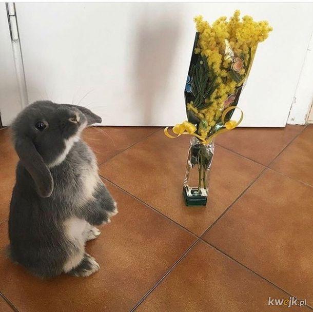 Urocze króliczki... bo zasługujesz na galerię z uroczymi króliczkami, obrazek 4