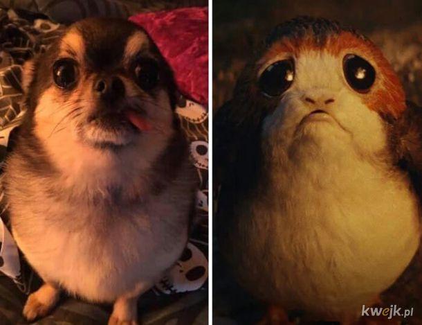 Internauci wrzucali na Facebooka zdjęcia swoich psów, które im coś przypominały