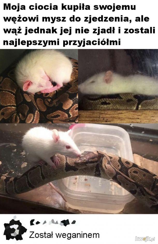 Wąż weganin