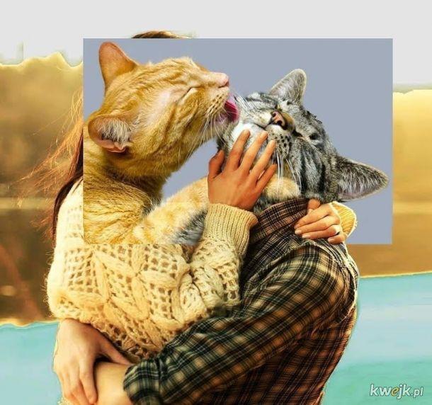 Kocham cię kocie