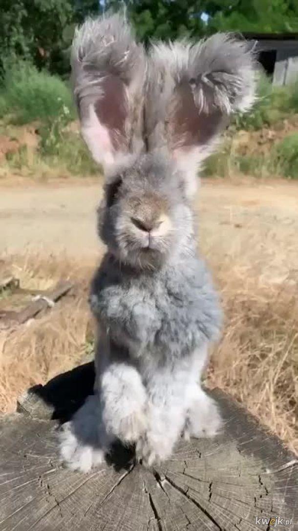 Urocze króliczki... bo zasługujesz na galerię z uroczymi króliczkami, obrazek 10
