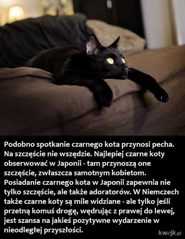 7 pechowych ciekawostek o czarnych kotach