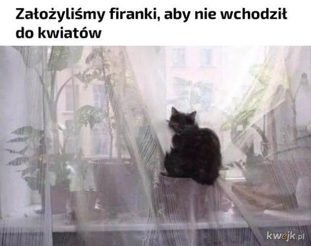 Kot sobie zawsze poradzi