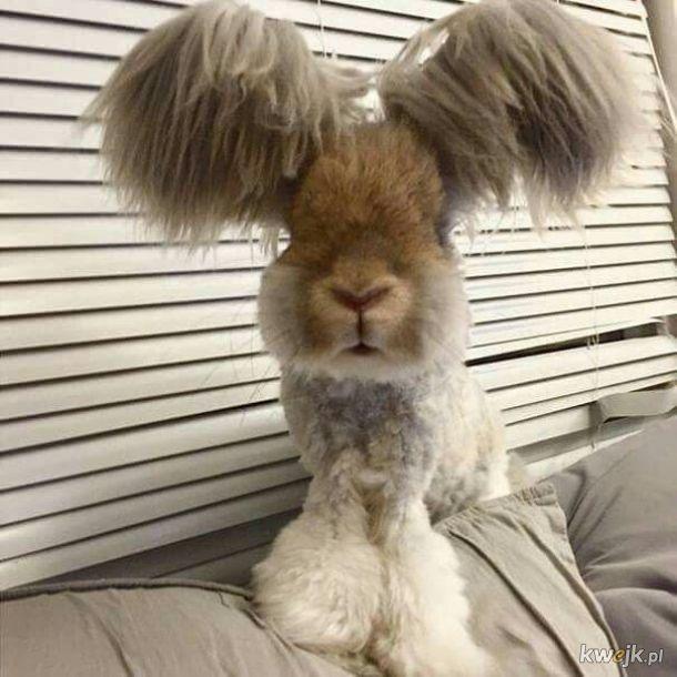 Urocze króliczki... bo zasługujesz na galerię z uroczymi króliczkami, obrazek 17