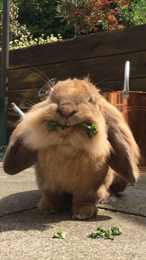 Urocze króliczki... bo zasługujesz na galerię z uroczymi króliczkami, obrazek 19