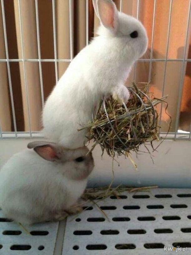 Urocze króliczki... bo zasługujesz na galerię z uroczymi króliczkami