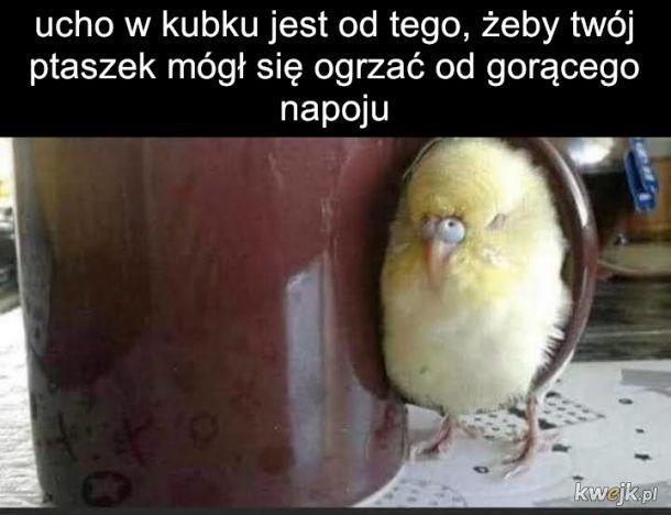 Papużka falista to dobry przyjaciel jeśli umiesz się nim zająć