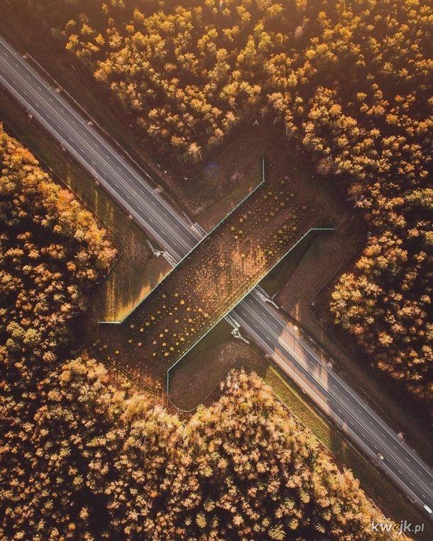Tak wygląda most dla zwierząt