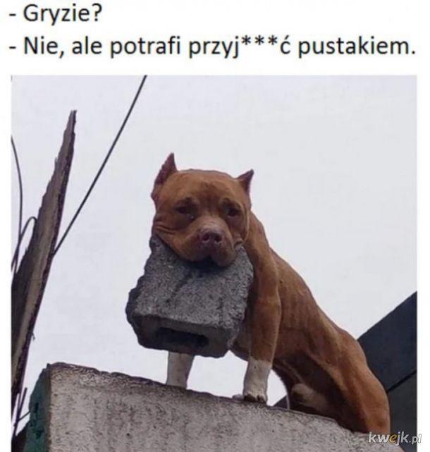 Czy pies gryzie