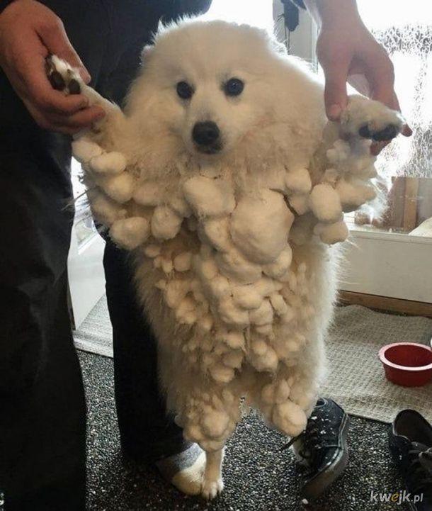 Zwierzaki i zima