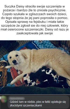 Wampierz_Janusz