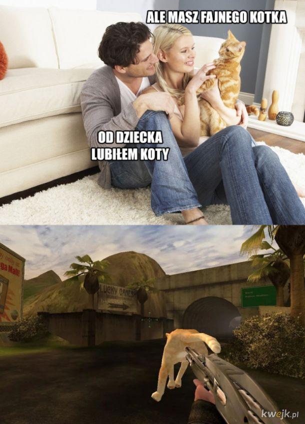 Fajny kotek