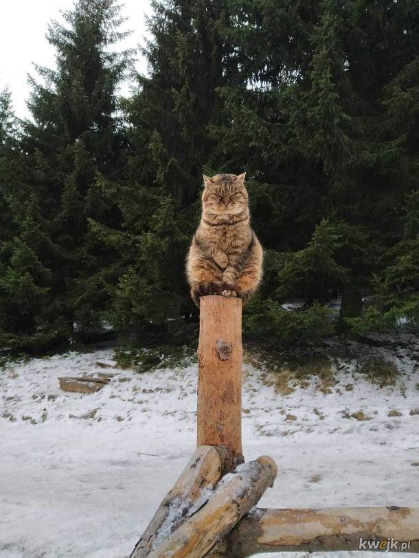 Totem z wk**** ***m kotem