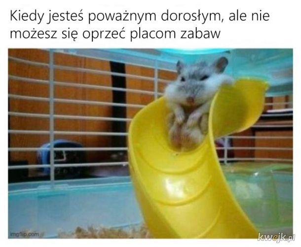 Pozytywne memy, obrazek 10