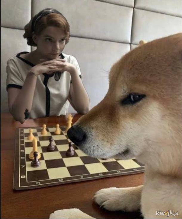 To ja kontra życie przy szachownicy mojego losu