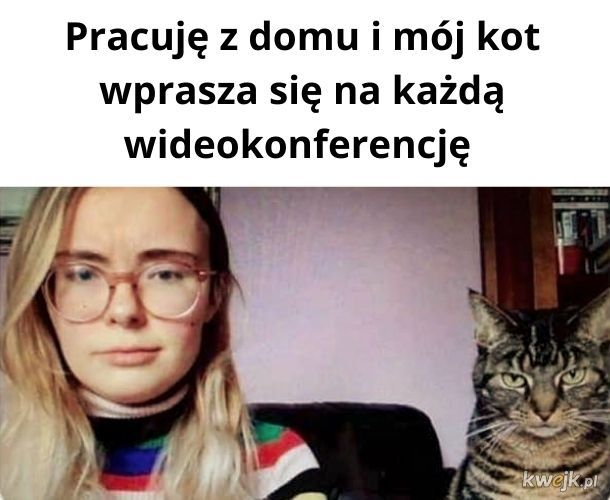Wideo-kitku