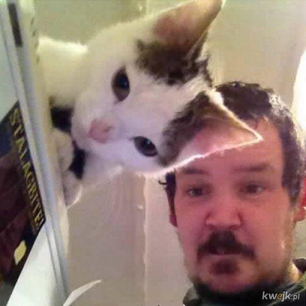 Przeźroczysty koteczek