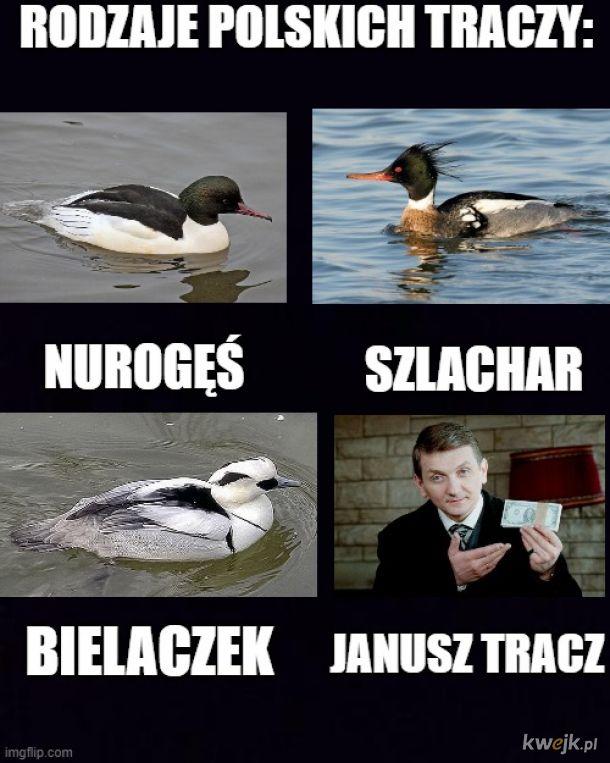 Ornitologia i tracze