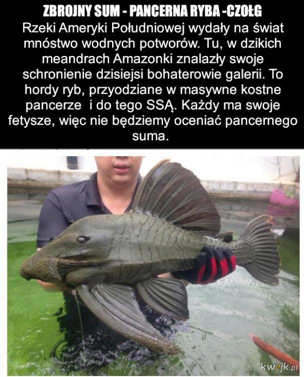To bardzo dziwna ryba jest
