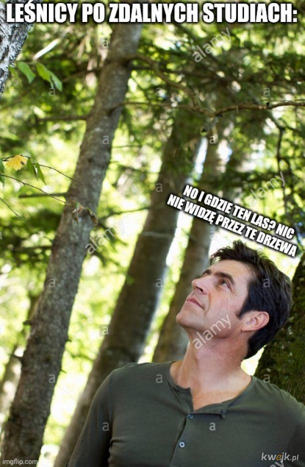 Gdzie ten las?