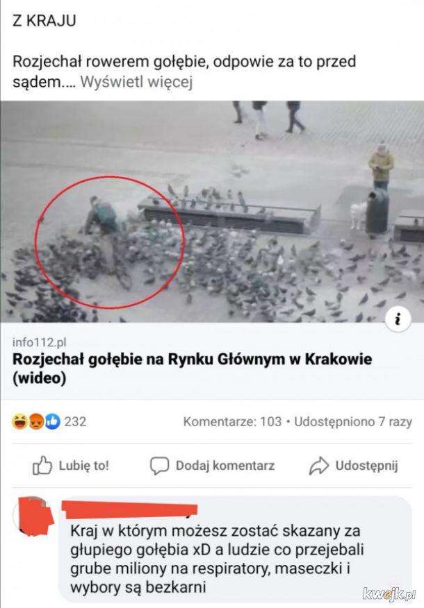 Kara za gołębie