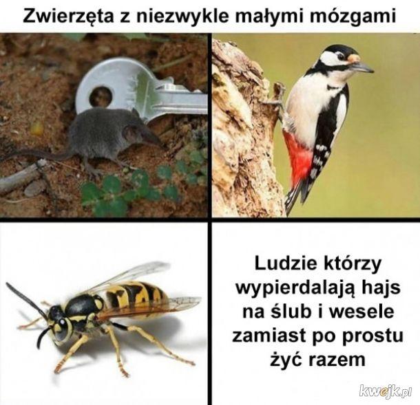 Zwierzęta z małymi mózgami