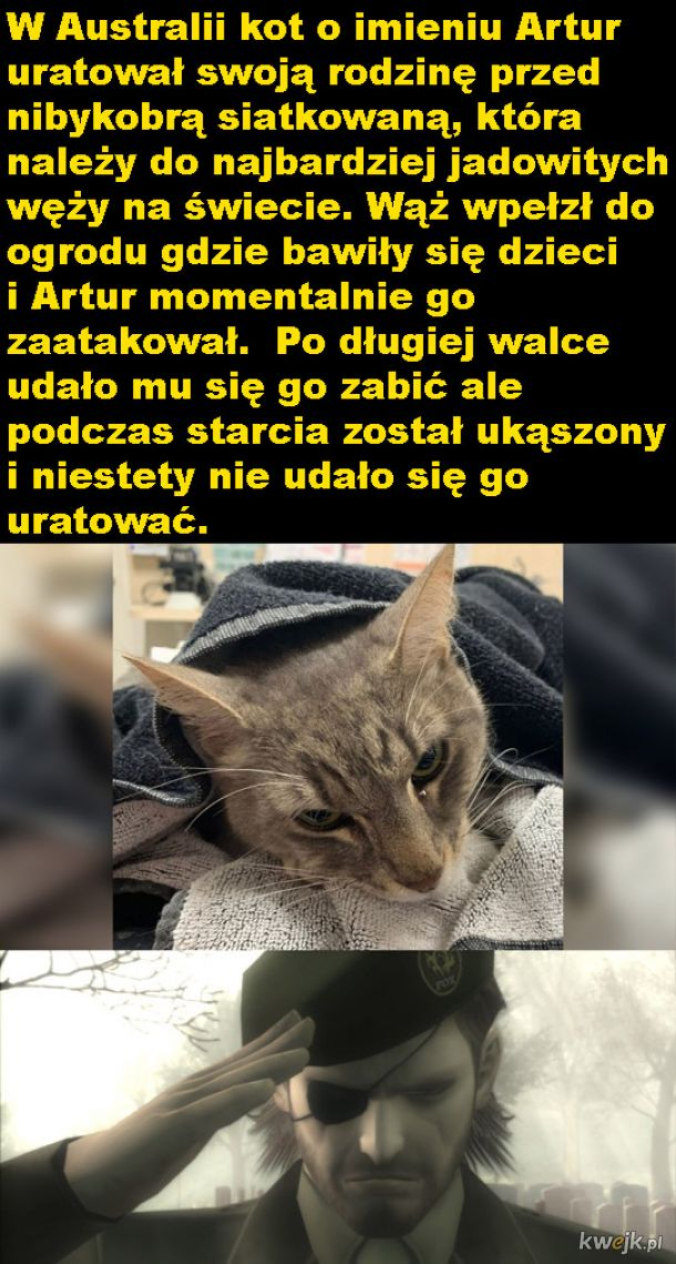 Odważny kot Artur