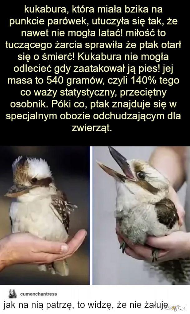 Spasione ptaszysko