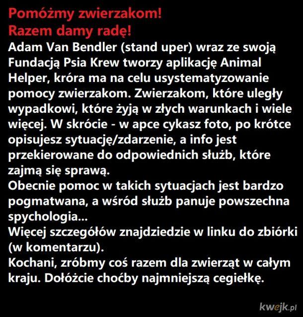 Zrzutka na ogólnopolską akcję pro zwierzęcą!