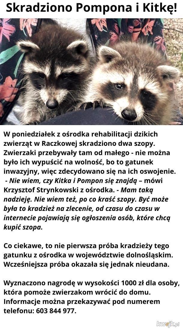 Skradziono Pompona i Kitkę!