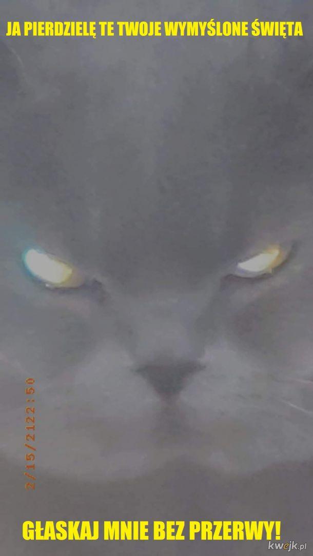 Ludzkie święta a kalendarz kotów