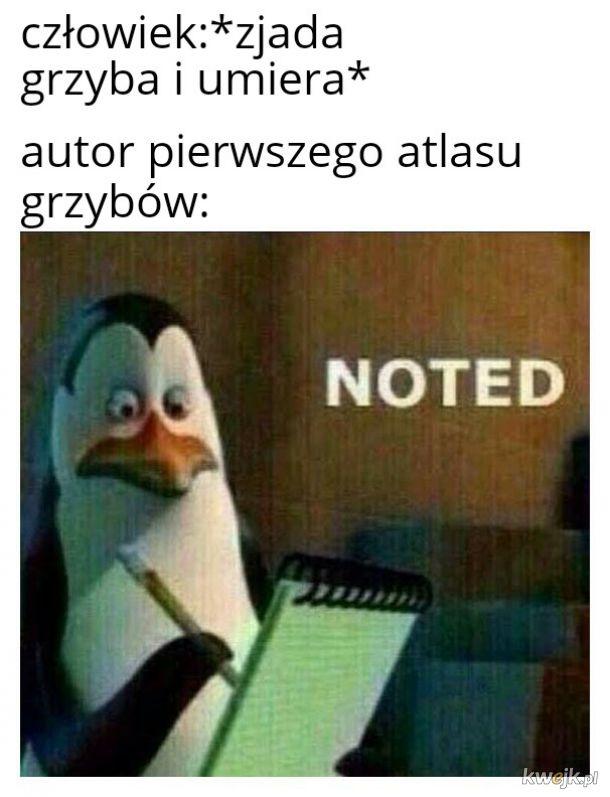 Grzyb
