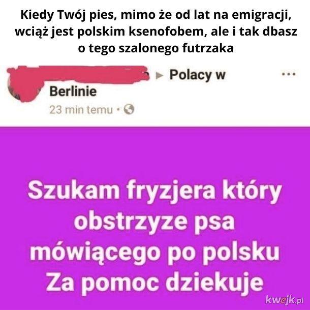 Z wszystkich języków świata zdecydował się mówić po polsku