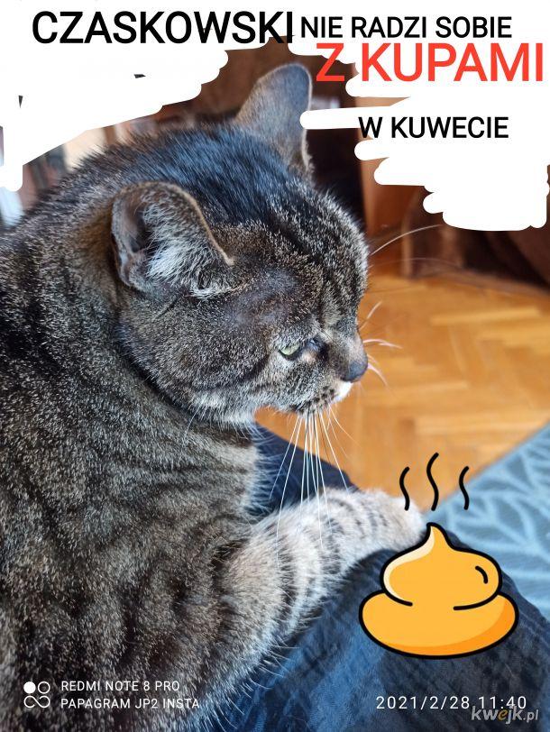 Czaskowski i kocie kupy