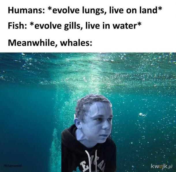 Morski ssak nie ma łatwo