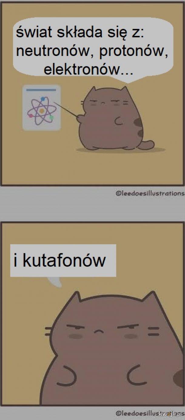 Wykład kotka o  świecie