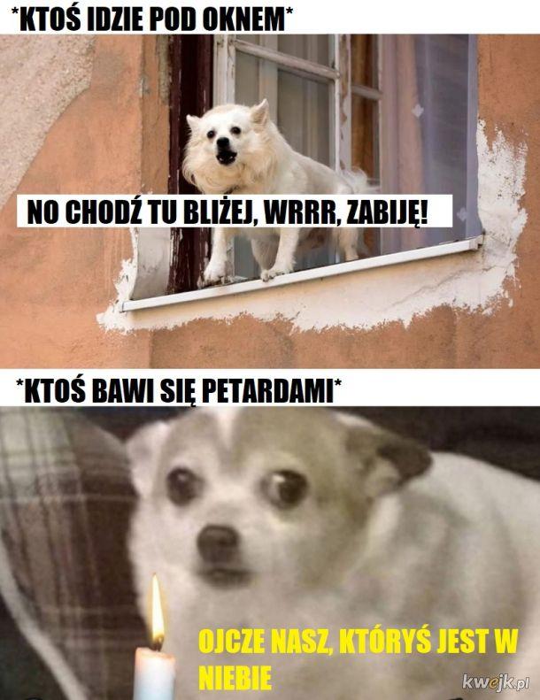 Psy tak mają