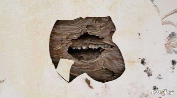 Widzę buzię w tym rzeczu, czyli pareidolialna galeria, obrazek 18