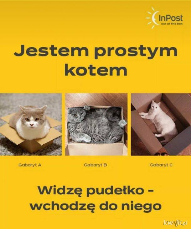 InPost z okazji dnia kota