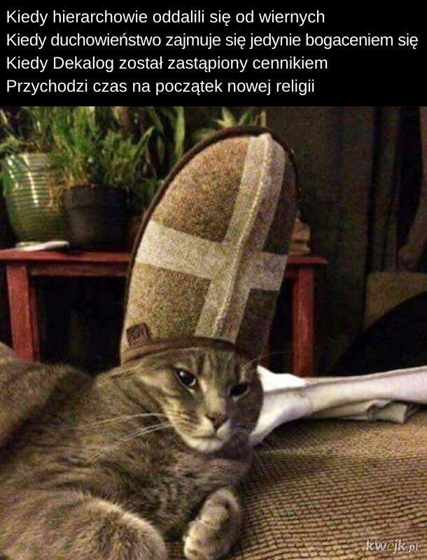 Kocie memy z okazji Dnia Kota!