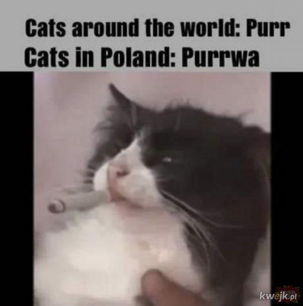 Purwa